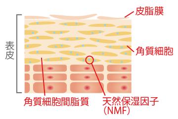 肌バランスの崩れた肌のイメージ